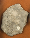 Clay shard 82 from New Smyrna