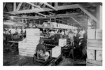 A. Duda & Sons, Inc. celery packing house in Slavia, c. 1945, Black and White