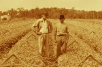 Andrew Duda, Sr. in celery fields, c.1935, Enhanced
