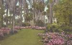 Azalea gardens adjoining the Hotel Alabama grounds, Winter Park, Florida. by Albertype Co.