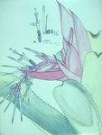 Billbergia Mognifica