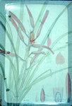 Pitcairnia Vaupensis