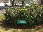 Environmentalism in Cuba by Daniella E. Sauri