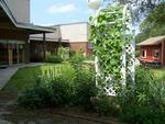 Creative School, garden