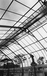 Arboretum, Biology student reglazing greenhouse, 1984