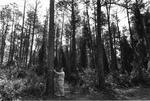 Arboretum, Dr. Henry Whittier measuring a tree