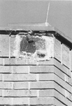 Education Building - bat in roof