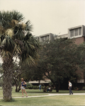 Chemistry Building - trees